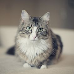 awesome cat is awesome