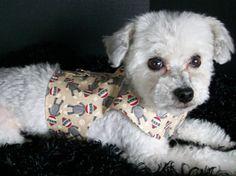 Sock Monkey Harness Dachshund  Dog Harness by graciespawprints, $11.95