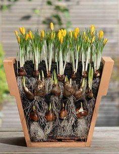 Секрет самого пышного и беспрерывного цветения - многослойная посадка. - Экологическое землетворчество | Экологическое землетворчество