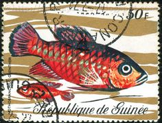 Postage stamp Country: Republic of Guinea Year: Unknown Subject: Aquatic Animals