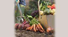 Consume alimentos organicos