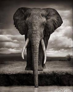 Nick Brandt (born 1964) is an English photographer who photographs exclusively in the African continent one of his goals being to record a last testament to the wild animals and places there before they are destroyed by the hands of man.  His photography from 2001 to 2012 bore little relation to the colour documentary-style wildlife photography that is the norm. He photographed on medium-format black and white film without telephoto or zoom lenses.  As American photography critic Vicki…