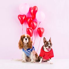 You need to read this adorable Valentine's Day puppy love story immediately.