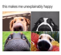 Animal Pictures with Captions that will Make You Smile - 5