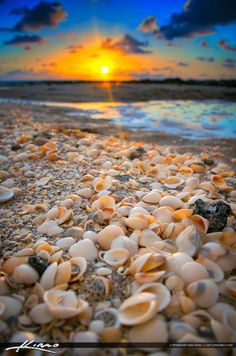 Seashells Along the Beach During Sunrise Beach Photography, Nature Photography, Beautiful Nature Wallpaper, Shell Beach, Sanibel Island, Beach Scenes, Beach Pictures, Ocean Waves, Beautiful Beaches