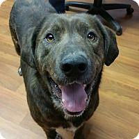Adopt A Pet :: Jasper - Lisbon, OH
