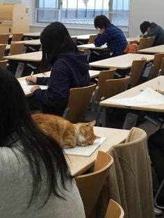 Gatto a scuola