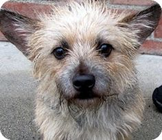 TOTO Needs a FOSTER or FOREVER HOME!!!!