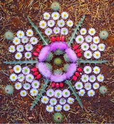 Flower assemblage in rotational symmetry by Arizona artist Kathy Klein