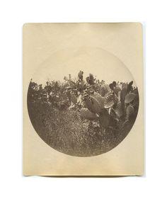 """An early Kodak amateur photo, c.1895, showing a nice scene of California cactus."" / via Jack Mord's etsy shop, The Woods."