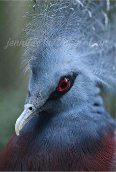 By jhs Toronto Zoo, Shades Of Blue, Bird, Purple, Green, Animals, Animais, Animales, Animaux