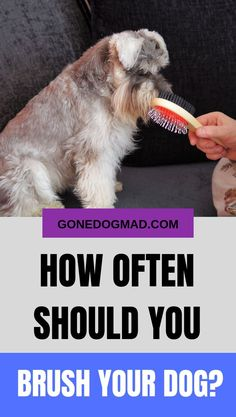 How often should you brush a dog is a question many owners ask themselves. Find out how often you should brush your dog as well as a few top brushing tips. Dog Care Tips, Pet Care, Dog Grooming Tips, Dog Health Tips, Group Of Dogs, Animal Antics, Happy Animals, Dog Boarding, Dog Training Tips