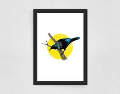 Tui Art Print - He manu whakatoi. Limited Edition of 25. New Zealand Art, Native Bird