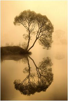 In the mirror, landscape, water, tree, reflections, by rav.n. uploaded by In Love with Nature