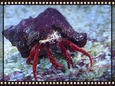 My hermit crab