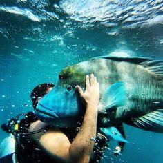 Friends of the ocean on the Great Barrier Reef off the coast of Australia  #greatbarrierreef #australia #scuba #diving #ocean #fish #gopro #qld #naturelovers #nature #passion #travel by amazingraceofgandj http://ift.tt/1UokkV2