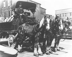 Wiedemann Brewing Team, Newport, Kentucky; loved to watch these horses as they delivered to 11th & central.