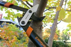 When Do You Need Pruning, Shaping, or Lopping