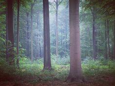 I just can't resist  . .  #friday #freedom #yeah  #theforestiscalling #birdsaresinging #breathein #slowdown #wanderlust #justgoshoot #neverstopexploring #findyourforest #tree #tree_captures #throughthepines #forest #naturelover #naturephotography #nature_perfection #nature_poetry #vsco #vsconature #peoplescreatives #livefolk #liveessential #wanderfolk #intothewild #exploremore #exklusive_shotz #natureart #theartofslowliving by my.life.cabin