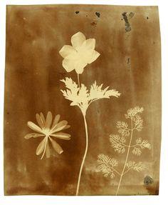 "William Henry Fox Talbot, ""Three Botanical Specimens"" (1840), photogenic drawing (courtesy Bodleian Libraries, Oxford University)"