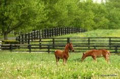 Markel Monday - Equine Insurance Info: About Age and Specified Perils