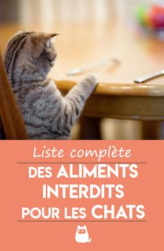 All Types Of Cats, Video Chat, Pitch Perfect, Intense Workout, Cat Grooming, Maine Coon, Cat Life, Cat Day, Animals And Pets