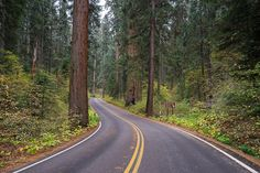 Sequoia National Park - top wedding destinations -  where to get married