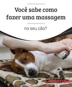 Você sabe como fazer uma massagem no seu cão?   Os #cães adoram as #massagens, e caso tenha #interesse em tentar fazer uma em seu #animal de estimação, não perca nossas dicas. #Conselhos