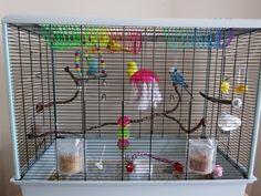 Great parakeet cage setup!