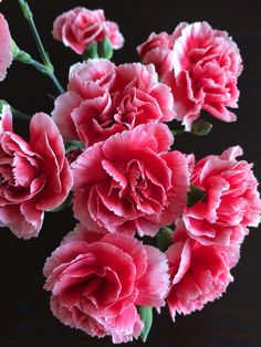 I remember my dad sitting in front of a bed of these in a park. So these and a carnation cake are my pick me ups. Wonderful Flowers, My Flower, Beautiful Roses, Pink Flowers, Beautiful Flowers, Pink Carnations, Gerbera, Birth Flowers, Calla Lily