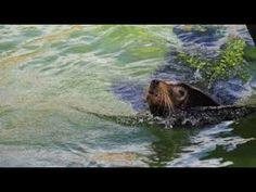 The Mysterious Wild Nature Feast of Predators Documentary Film