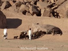 Bedouins in Sinai desert in Egypt. For more pictures visit www.mysecretlocation.net  #sinai #desert #egypt #sharmelsheikh #safari #amazing #beautiful #blogger #destination #instantravel #tbt #trip  #sunny #travel #travelblog #mysecretlocation #advanture #desert