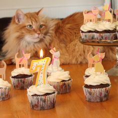 i baked kitty cupcakes for marc's 7th birthday.