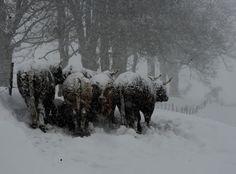 dans-le-pilat-photo-philippe-vacher
