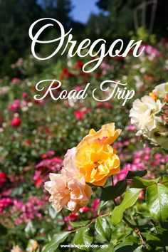 My Oregon road trip is taking me up the coast and inland. Highlights include the coastal beaches, Portland, and the Willamette Valley.