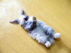 24 Hilarious Photos of Adorable Animals Falling Asleep in Weird Place