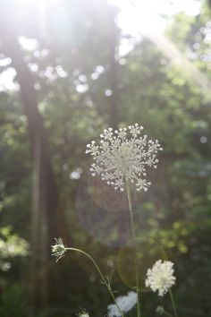 Favorite Flower <3