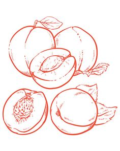 Items similar to Off Sale Drawing Sweet apricots with leafs. apricots with clipping path. (EPS, JPG) on Etsy Drawing Reference, Line Drawing, Drawing Sketches, Art Drawings, Corporate Design, Fruit Sketch, Fruits Drawing, Bullet Journal Ideas Pages, Fruit Art