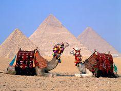 Camellos, los transportes vivientes de Egipto.