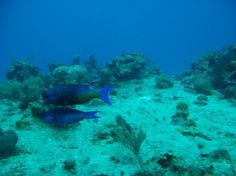 Book your tickets online for Palancar Reef, Cozumel: See 1,755 reviews, articles, and 159 photos of Palancar Reef, ranked No.2 on TripAdvisor among 142 attractions in Cozumel.
