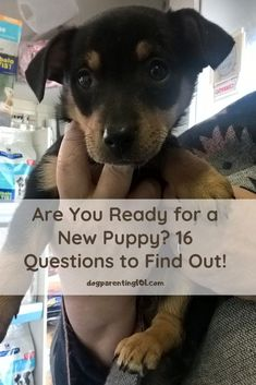 No one can blame you for wanting to take that adorable puppy home right now! While it is tempting, are you really ready for all that entails? Pet Sitters International, Cute Puppies, Dogs And Puppies, Group Of Dogs, Cute Dog Photos, Pet Dogs, Pets, Animal Antics, Dog Games