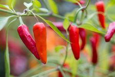 Discover five of the best vegetable seeds to sow in November, including peas and broad beans, with expert advice from BBC Gardeners' World Magazine.