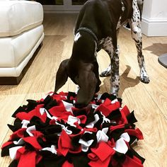 @rufflesnuffle posted to Instagram: Presents!! Today I was introduced to my new #rufflesnuffle mat and #challengercube 😃 @ruffle.snuffle . . . #snufflemat #braingames #rufflesnufflemat #healthymind #pointersofinstagram #energetic #mindgames #enrichment #gsp #germanshorthairedpointer Brain Games, German Shorthaired Pointer, Homemade Dog Treats, Mind Games, Healthy Mind, Guinea Pigs, Presents, Dogs, Animals