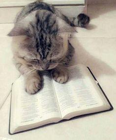 Otro gato lector. Desde @canallector