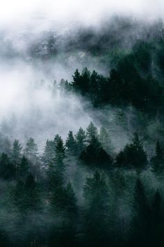 Forest landscape of Norway in moody clouds Forest Landscape, Abstract Landscape, Landscape Paintings, Acrylic Paintings, Landscapes, Fog Photography, Landscape Photography Tips, Travel Photography, Catty Noir