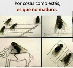 memes :v # Humor # amreading # books # wattpad Funny Spanish Memes, Spanish Humor, Crazy Funny Memes, Funny Animal Memes, Wtf Funny, Funny Animals, Funny Quotes, Hilarious, Funny Images