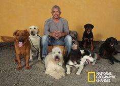 César Millán é um célebre especialista em comportamento canino. O Melhor Amigo do Cão  #NatGeo  http://www.natgeo.com.br/omelhoramigodocao
