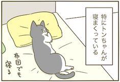 寝る子 | うちの猫がまた変なことしてる。【猫まんが】