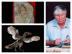 """Storrs L. Olson, Curator of Birds at the National Museum of Natural History at the Smithsonian, said of the Archaeoraptor fraud found in 1999, """"Simply imaginary and has no place outside of science fiction.""""  He went on to add, """"The idea of feathered dinosaurs . . . is now fast becoming one of the grander scientific hoaxes of our age."""""""