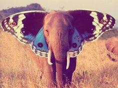Butterphant?  Elifly?
